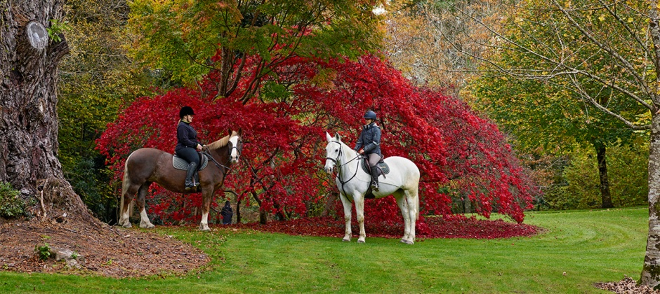 Ashford Castle: Horse Riding