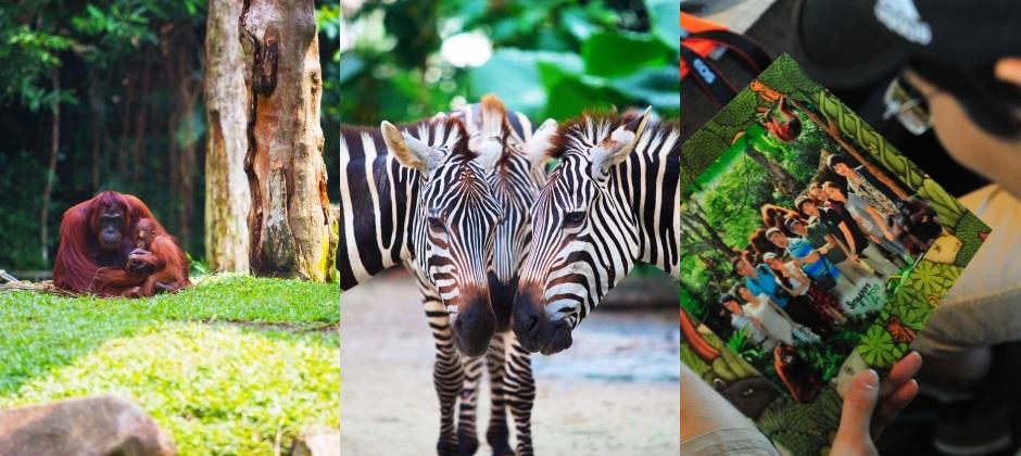Singapore: Zoo